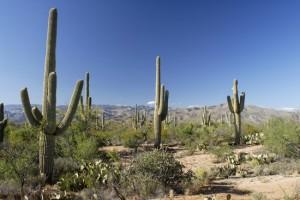 cactus-enviro-science